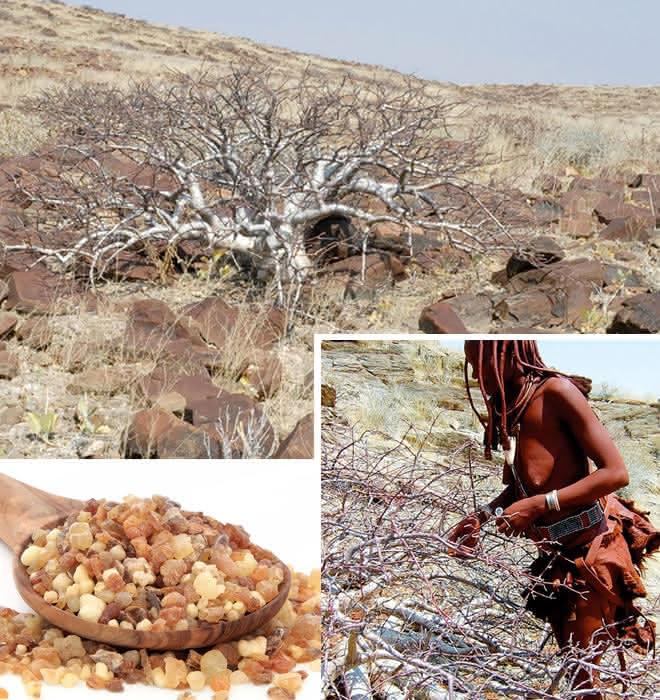 Namibische Myrre